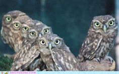Owls and Owl