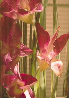 Orchids in glass vase
