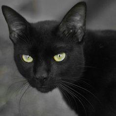 Beautiful BLACK C