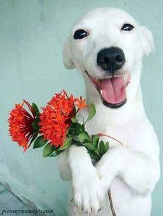 Sonreír es esencial y mejora tu vida  #piensoymascotas #dog #dogs #eyes #dogs_of_pinterest #pet #pets #animal #animals #dogsitting #photooftheday #dogoftheday #lovedogs #lovepuppies #hound #adorable #doglover