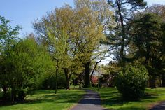 Memorial Park and Maplewood Library, Maplewood NJ