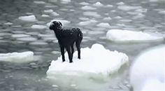 Ce chien sauvé de son île de glace.   25 GIFs d'animaux qui vont vous redonner le sourire