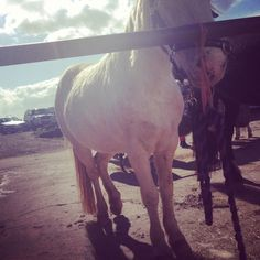 Our beautiful pony Queenie :)