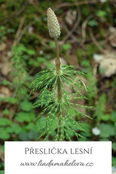 Dandelion, Health, Flowers, Plants, Catalog, Health Care, Dandelions, Florals, Plant