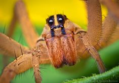 Spider Basics: How Spiders Eat