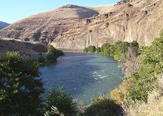 deschutes river; The Deschutes River boasts one of the healthiest runs of wild fall Chinook salmon remaining in the Columbia River basin. No hatchery program exists for fall Chinook on the Deschutes. Deschutes fall Chinook begin entering the river in August and peak in late September and early October. Spawning typically begins in October and continues until late December. Fall Chinook are considered main stem spawners, which means they prefer to spawn in or near the main river channel.