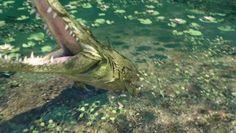 Farcry 3 Crocodile