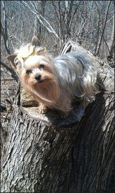 Posing on a stump in Schrier Park