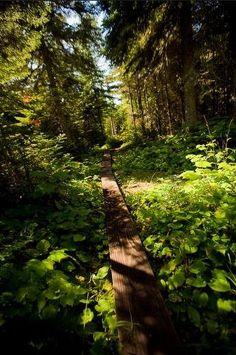 Isle Royale Walking Path