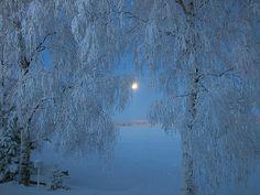 Blue morning   por Vaeltaja