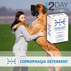 9 Pet Ideas Dog Supplements Dog Supplies Senior Wellness