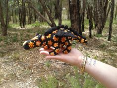 Mini 'Smaug' the African Flower Dragon. Project notes and pattern link here; http://www.ravelry.com/projects/LindaDavie/smaug-the-african-flower-dragon-crochet-pattern