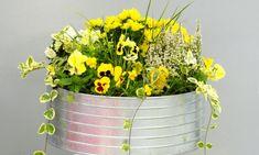 Composición con crisantemos Chrysanthemum, Arte Floral, Plantar, Colorful Flowers, Chrysanthemums, Yellow Flowers, Flowering Plants, Vegetable Gardening, Bouquets