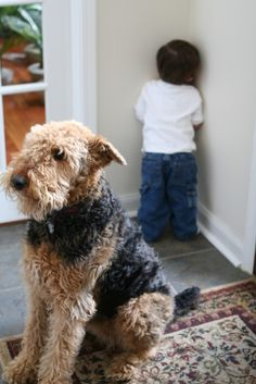 ... a friend suffers with you ...   Murphy Waits for Michael in Time Out  ... found on a private blog ...