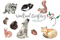 Hand Painted Watercolor Clip Art - Woodland, Forest, Creatures, Animals, Raccoon, Fox, Rabbit, Squirrel, Chipmunk, Skunk, Acorn, Pinecone Hand painted forest animal clip art in colorful