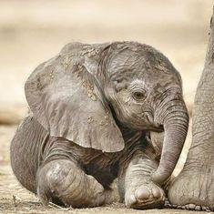 Baby Elephant, Painting Inspiration, Creatures, Awesome, Animals, Instagram, Elephants, Animais, Elephant Baby
