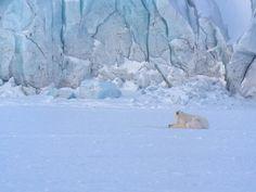 Iphone Photography, Nature Photography, Photo Equipment, Isco, Travel Light, Polar Bear, Arctic, In This World, Binoculars