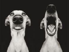 Очаровательные собачьи портреты от талантливого фотографа