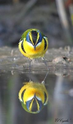 beautiful pictures of animals and their reflection (4)