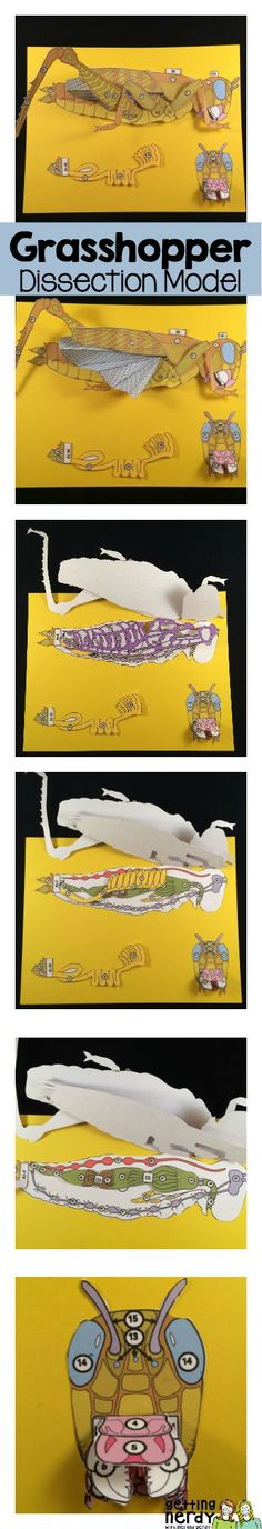 This is SO cool! Grasshopper dissection model for interactive notebooks.