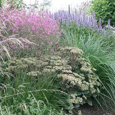 #mygarden #mygardenstories #floweringnow… Sedum Matrona with Agastache and grasses.