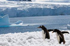 Rodzina pingwinów obejmuje gatunki morskie (na lądzie pojawiają się jedynie w strefie brzegowej) zamieszkujące zimne morza półkuli południowej. Najliczniejsze wokół Antarktydy i sąsiednich wysp oraz wybrzeży Ameryki Południowej, najwięcej gatunków w pobliżu Nowej Zelandii. Jedynym gatunkiem gnieżdżącym się nieco na północ od równika (na Galapagos) jest pingwin równikowy.