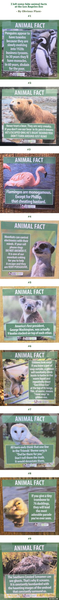 Genius Posts Educational Animal Facts At The Los Angeles Zoo (By Obvious Plant)
