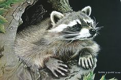 1989 Martiena Richter Signed Print The Sentry Raccoon Scratchboard Art 207/950
