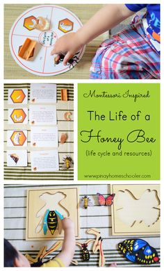 Learning about the life cycle of a honey bee.