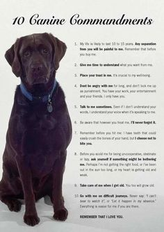 For the dog lovers