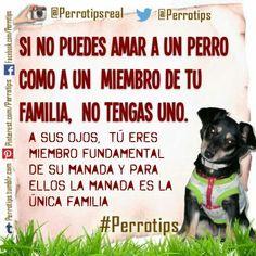 Son nuestra familia peluda,  para siempre #perrotips