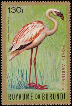Lesser Flamingo stamps - mainly images - gallery format