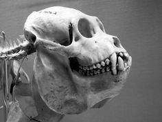 Skeleton by Gaetan Lee, via Flickr