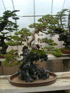 Masahiko Kimura Bonsai | Presentación de los bonsais y la casa de Masahiko Kimura. - Página 2