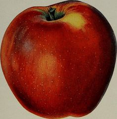 "Image from page 151 of ""[Fruit culture]"" (1912) 