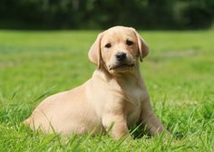 What Are The Best Dogs for First-Time Owners? Vets Place Their Votes