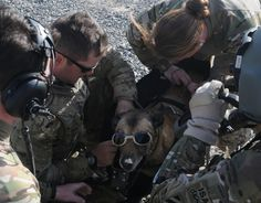 LUCA, a Military Working Dog with Stryker Brigade Combat Team, Infantry Division gets geared up for medical evacuation training, Feb. at Forward Operating Base Spin Boldak, Afghanistan. Military Working Dogs, Military Dogs, Police Dogs, Military Police, War Dogs, Dog Soldiers, Loyal Dogs, Dog Costumes, Service Dogs