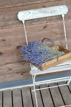 sichiyoさんが投稿した画像です。他の sichiyoさんの画像も見てませんか?|おすすめの観葉植物や花の名前、ガーデニング雑貨が見つかる!GreenSnap(グリーンスナップ)