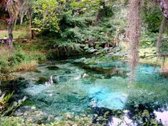 Natural Parks around Orlando Florida. Kelly Park you can float down a natural clear spring 'lazy river.' At Blue Spring State Park you will find the manatees.