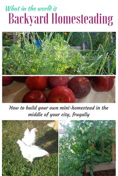 Backyard homesteading is quickly becoming more popular because of the simplicity…