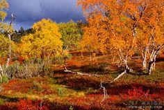 paisajes de otoño paises nordicos 2014 - Buscar con Google
