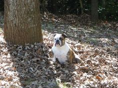 Fall fido fun! #cute #dog in #nature during the #fall season ! #woof!