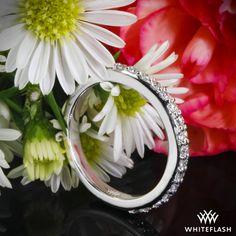 "Platinum ""Guinevere Pave"" Diamond Wedding Ring."