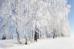 White Picture by Denis Belyaev on 500px