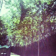 #Gabrielaarroiophotos #nature #trees