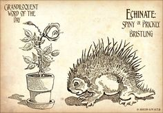 Grandiloquent Word of the Day: Echinate. Clearly derived from the same root word from which Echidna springs, referring to either the spiny anteater or from Greek mythology, where Echidna was a monster, half-woman and half-snake, who lived alone in a cave. She was the mate of the most fearsome monster Typhon.