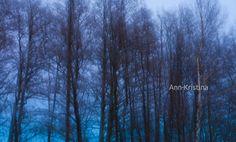 Ann-Kristina Al-Zalimi, cold, winter, blue moment, evening, sininen hetki, lehtipuut, talvi, finland