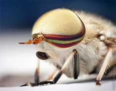 Macro Photography of Insects by Thomas Shahan | Inspiration Grid | Design Inspiration