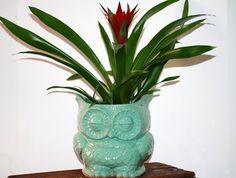 Mint owl planter