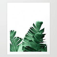 Palm, palm leaf, tropical, tropic...